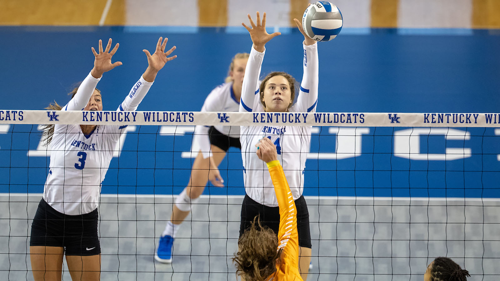 Bella Bell Volleyball University Of Kentucky Athletics
